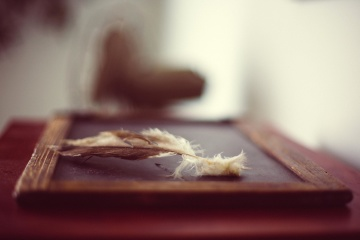 desk, feather, decoration, interior