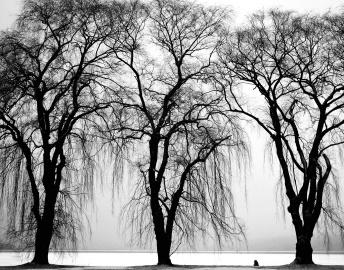 Arbre, monochrome, paysage, branche, hiver, brouillard, parc, nature, neige