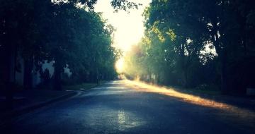 road, landscape, tree, asphalt, shadow, dark