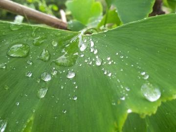 leaf, flora, dew, rain, garden, environment, droplet, wet, moisture