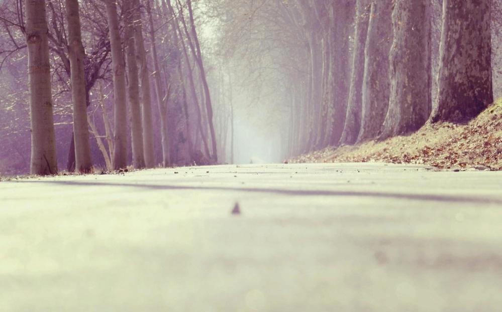 cesty, lesné, drevo, asfalt, krajina, príroda, hmla