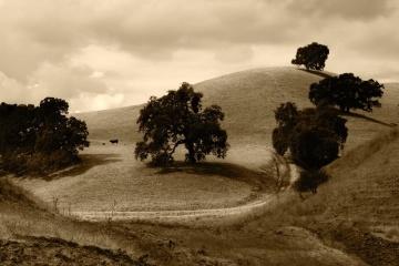 landskap, hill, beite, gress, sommer, jord, monokrom, treet, eng