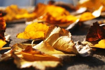 wood, nature, leaf, autumn, macro, dry