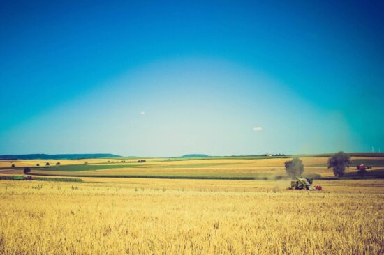 wheat, agriculture, farm, landscape, field, sky, rural, grass, tractor