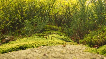 landscape, nature, wood, leaf, tree, moss, lichen, grass
