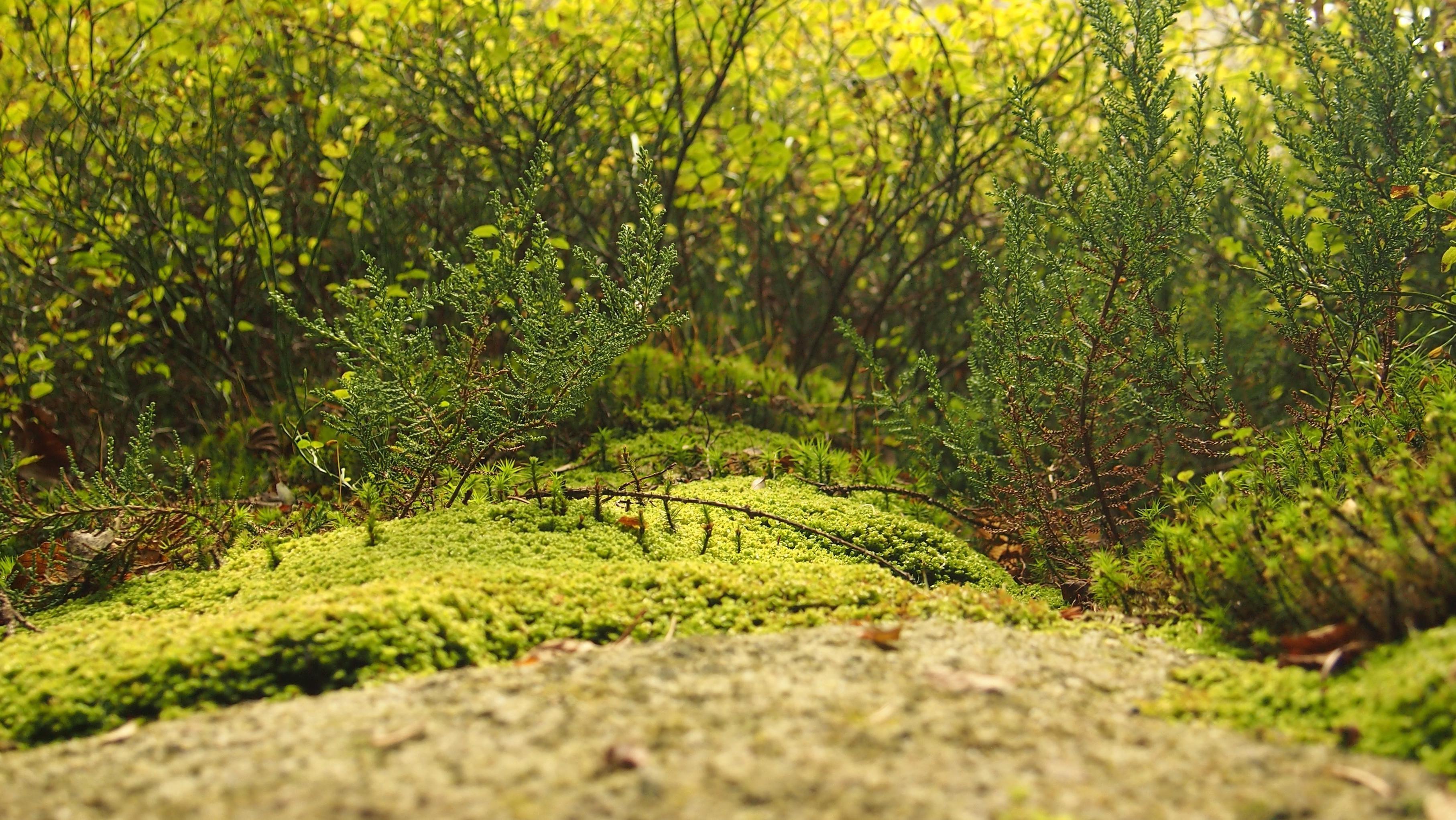 kostenlose bild landschaft natur holz blatt baum moos flechten gras. Black Bedroom Furniture Sets. Home Design Ideas
