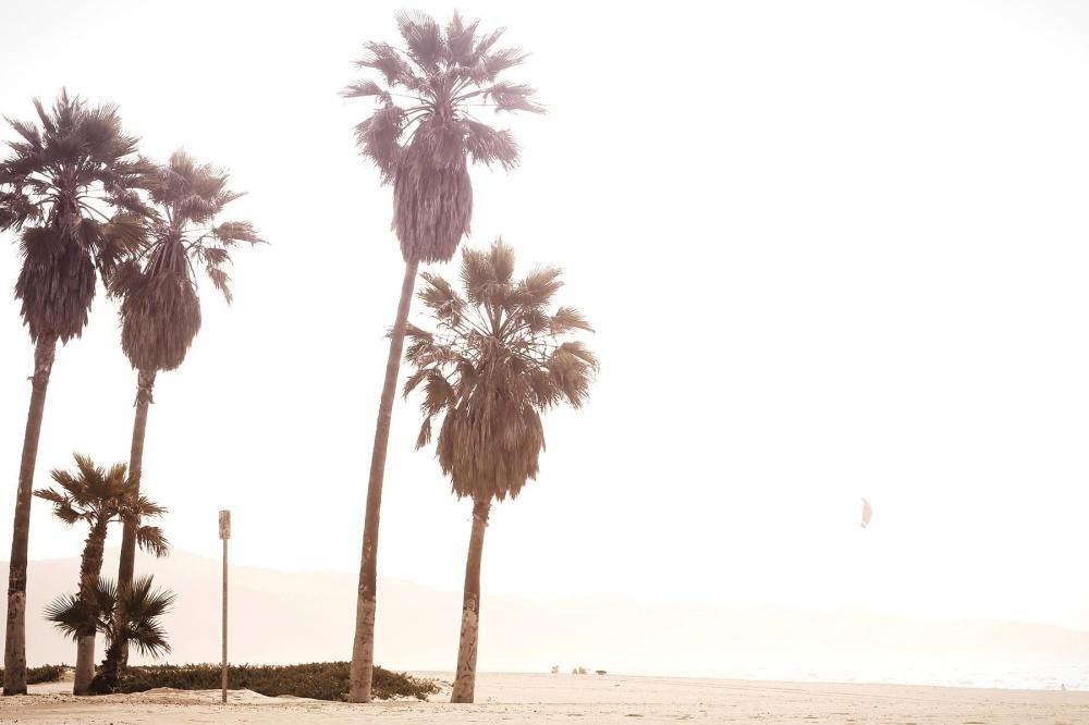 Kostenlose Bild: Sand, Palme, Strand, Sommer, Baum, Küste