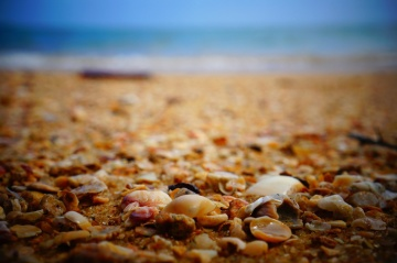 sea, beach, rocks, beach, seashell, ground, soil