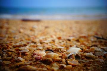 moře, pláž, skály, pláž, mušle, půdu, půda