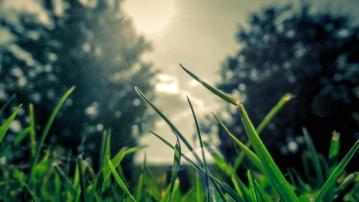 Gras, Feld, Natur, Makro, Flora, Blatt, Garten, Rasen, Sommer