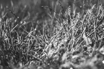grass, nature, field, plant, monochrome