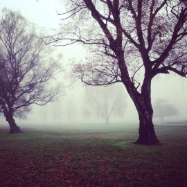 tree, fog, mist, landscape, dawn, wood, park, nature, branch