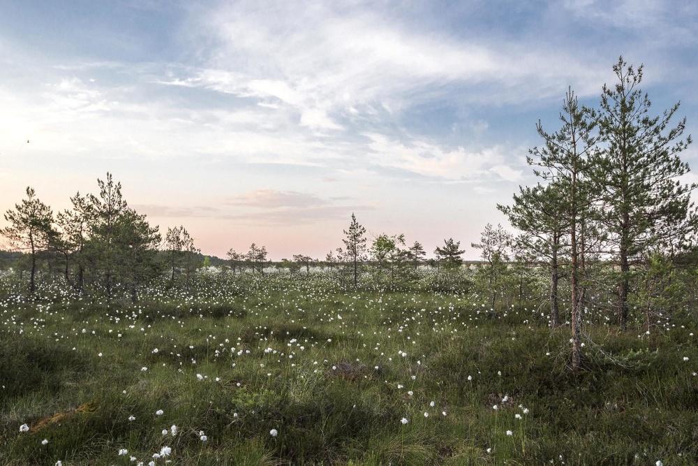 Pré, herbe, arbre, nuage, végétation, feuillage, paysage, arbre, nature, ciel, printemps