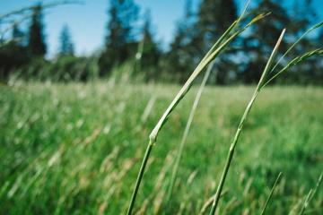 трева, поле, флора, хотел hayfield, лято, природа, околна среда, тревата