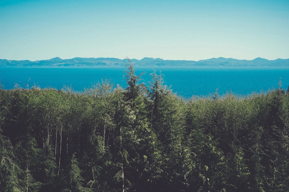 conifer, forest, landscape, tree, nature, mountain, sky, wood, water, sea