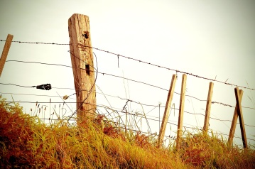 barbed wire, fence, grass, wire, sky, wood, rural