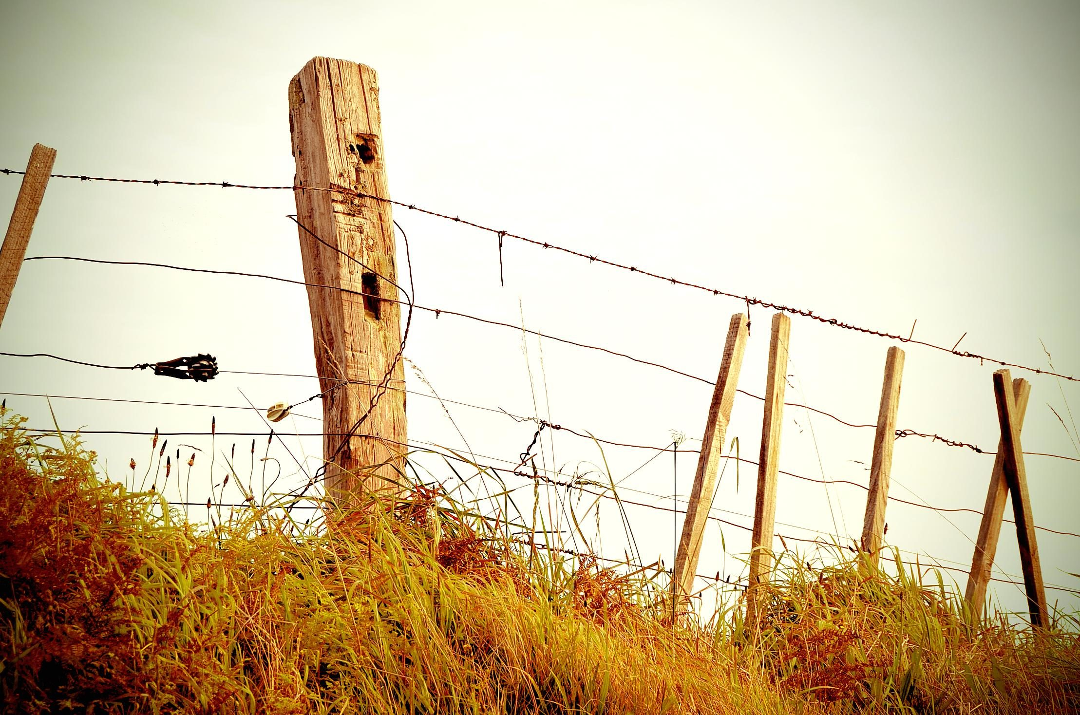 Free picture: barbed wire, fence, grass, wire, sky, wood, rural
