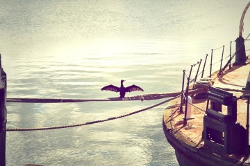 Agua, mar, océano, puesta del sol, pájaro, playa, barco, sol