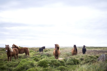 Cheval, animal, cavalerie, herbe, bétail, bétail, champ, prairie, rural
