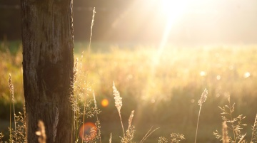 sunshine, sunset, nature, grass, field, summer, landscape, rural