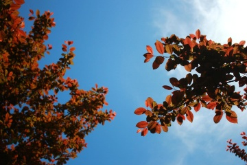 tree, leaf, nature, branch, flora, autumn, blue sky
