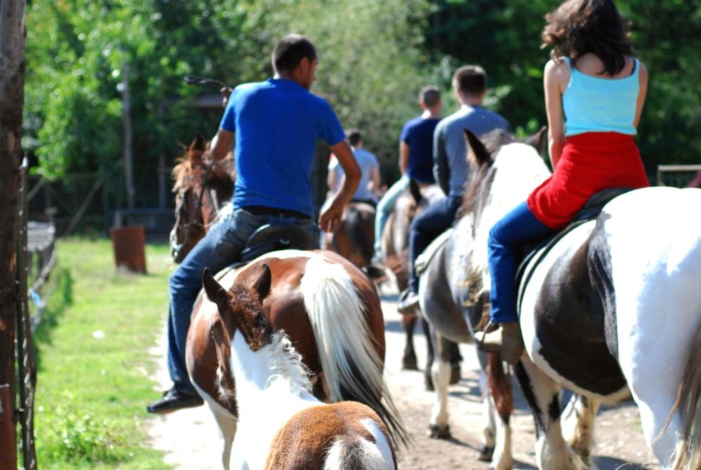 konjica, žena, konj, životinja, ljudi, rekreacija