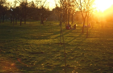 landscape, dawn, tree, sunset, sunshine, people, park, grass, tree, nature, shadow