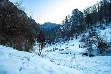 雪、冬、寒さ、山、木、木、風景、凍結、氷、雪
