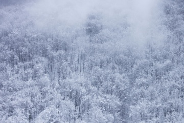winter, snowflake, frost, landscape, ice, snow, forest, cold
