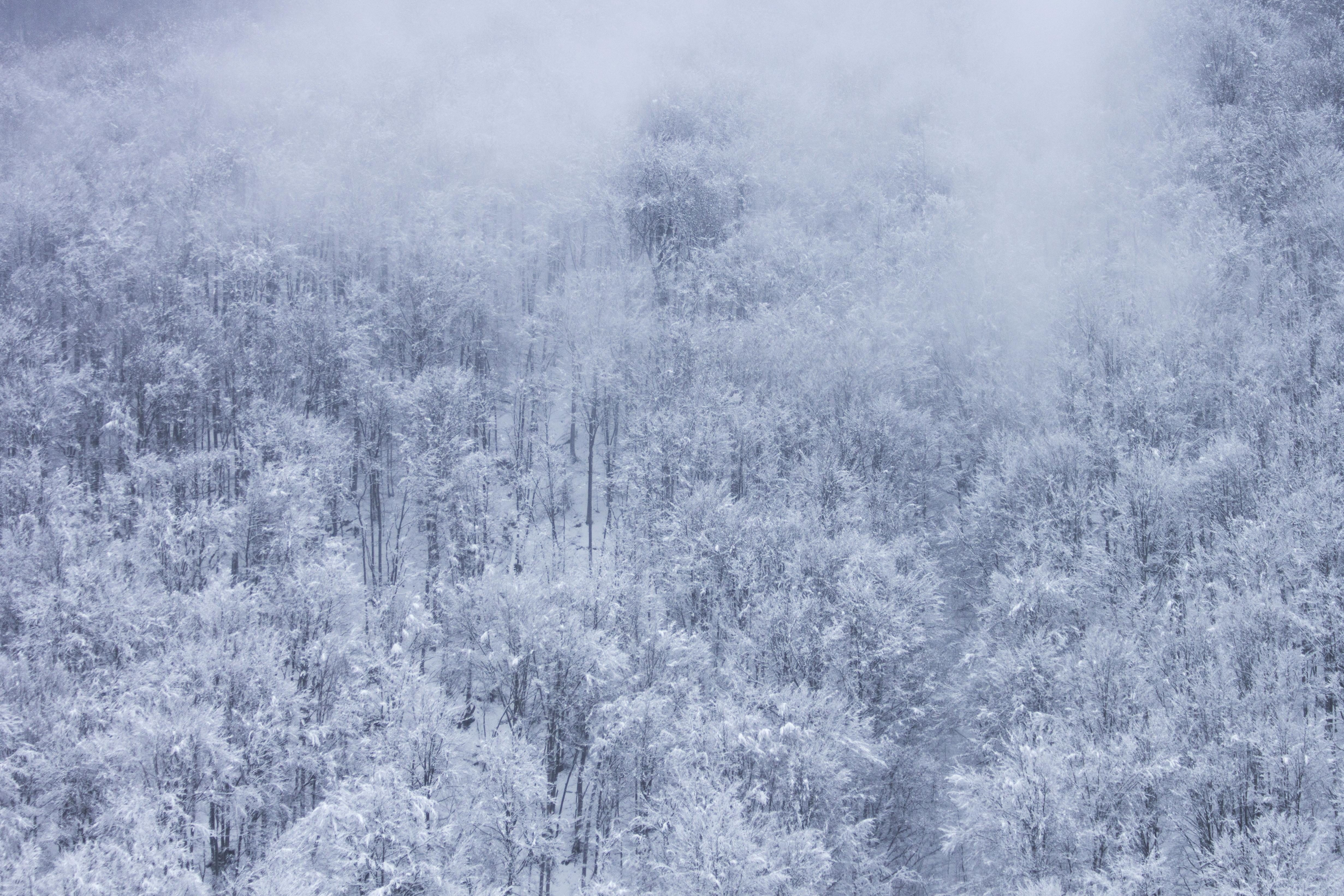 Free Picture Winter Snowflake Frost Landscape Ice