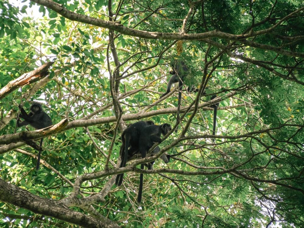 木、木材、自然、葉、猿、霊長類、類人猿、ジャングル、熱帯、フォレスト