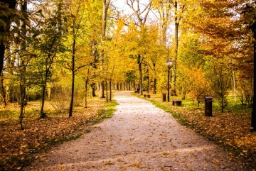 leaf, road, wood, tree, landscape, park, alley, footpath, nature, autumn, nature