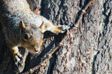 chipmunk, nature, wildlife, squirrel, rodent, tree bark