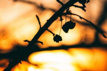 Coucher de soleil, silhouette, soleil, ciel, silhouette, branche, lumière, arbre, rétro-éclairé