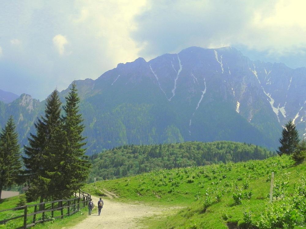 berg, natur, trä, landskap, dimma, dalen, träd, berg