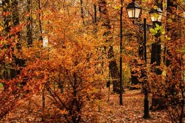 Blatt, Holz, Baum, Natur, Landschaft, Herbst, Wald