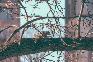 chipmunk, branch, tree, winter, branch, nature, wood, red squirrel, squirrel