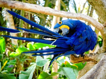 bird, nature, wildlife, parrot, macaw, animal, jungle, feather, exotic, rainforest