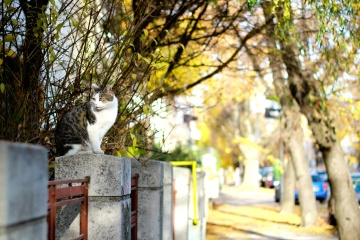 animal, cat, urban, street, domestic cat, tree
