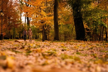 people, autumn, leaf, wood, tree, nature, park, landscape, forest