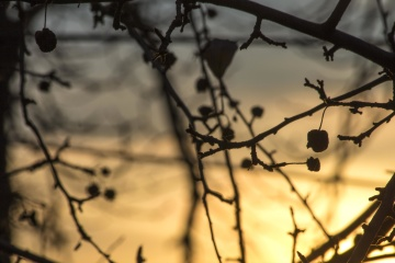 autumn, nature, tree, branch, wood, silhouette, sky, dusk, sunset