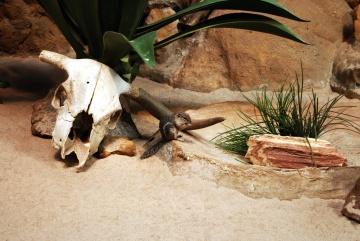 песок, камень, пустыня, кости, белка, животных, бурундук