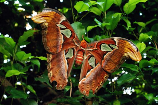 nature, leaf, organism, butterfly, moth, insect