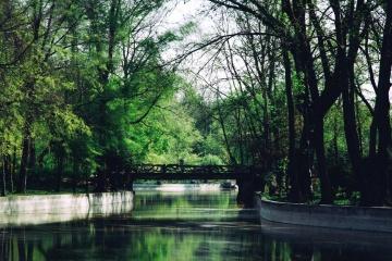 дърво, пейзаж, дърво, природа, вода, езеро, парк, река, отражение