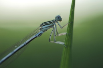 insect, nature, dragonfly, arthropod, invertebrate, macro