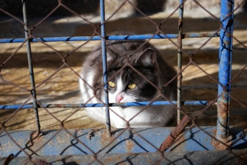 cage, fence, feline, cat, kitten, animal, pet, fur, domestic