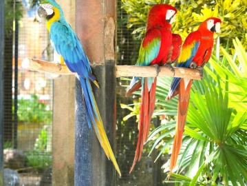 parrot, bird, feather, macaw, wildlife, exotic, beak, animal, tropical