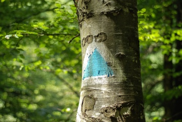 sign, forest, wood, tree, nature, leaf