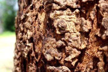 Nature, texture, écorce, arbre, écorce, bois, motif, sec, environnement, rugueux