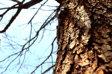 tree, bark, wood, nature, abstract, branch, plant